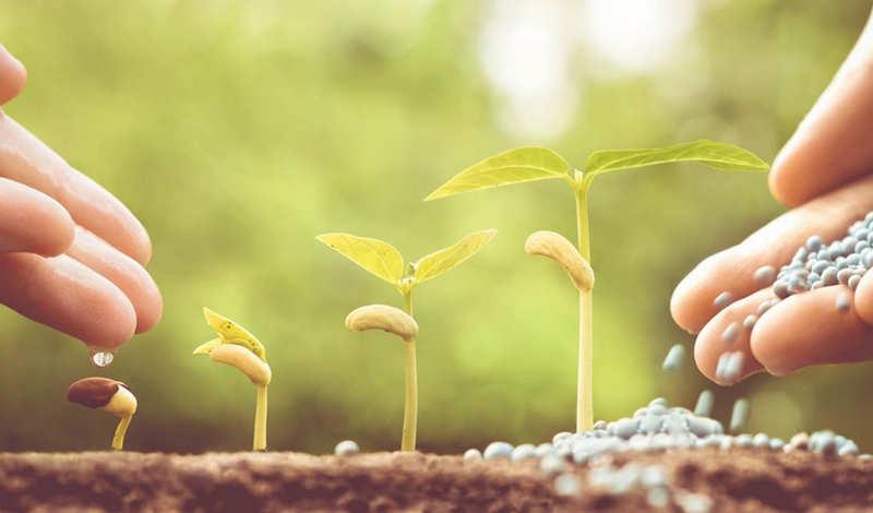 Чем лучше удобрить землю - как удобряется своими руками почва в саду и на огороде