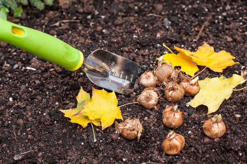 Осенняя обработка почвы на участке