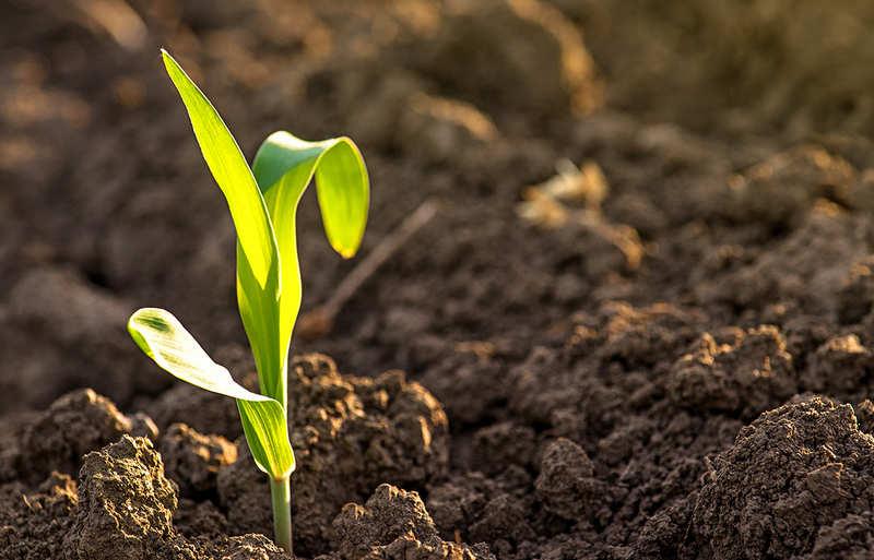 Как быстро раскислить почву
